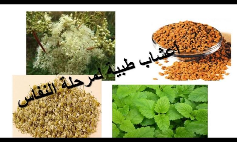 Photo of أهم 10 أعشاب للنفاس