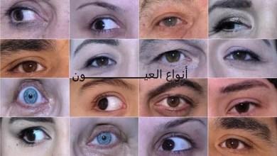 Photo of أنواع العيون وصفاتها