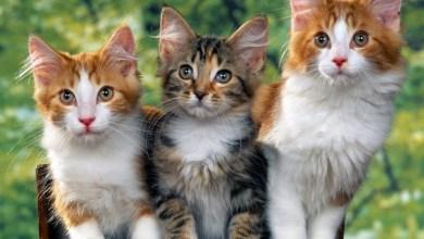 Photo of تفسير رؤية القطط في المنام والخوف منها