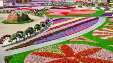 Photo of أجمل 7 حدائق و متنزهات شهيرة في إمارة دبي