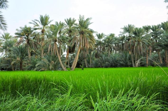 اجمل مناظر طبيعية في السعودية .