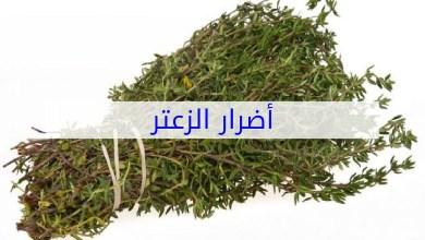 Photo of اضرار الزعتر على المرأة الحامل