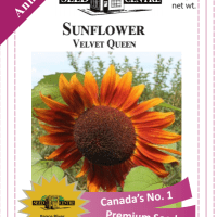 sunflower velvet queen
