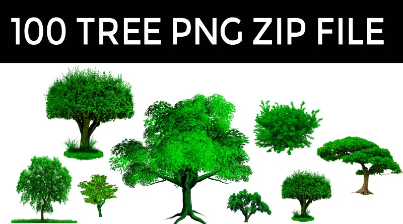 All New Tree Png Zip File, Photoshop Editing Png, Picsart Editing Tree Png