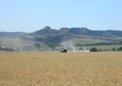Wheat Harvesters on the edge of Pine Ridge