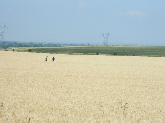 rippened wheat field in western nebraska