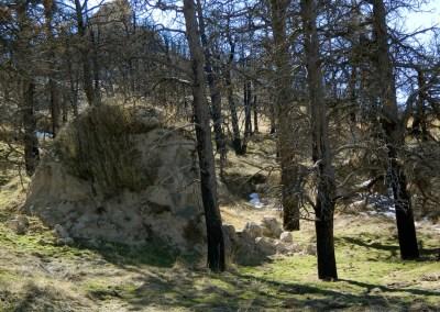 Sandstone boulders and ponderosatrees