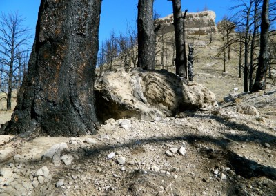 Burn scars on the trees and the ground of the Nebraska National Forest