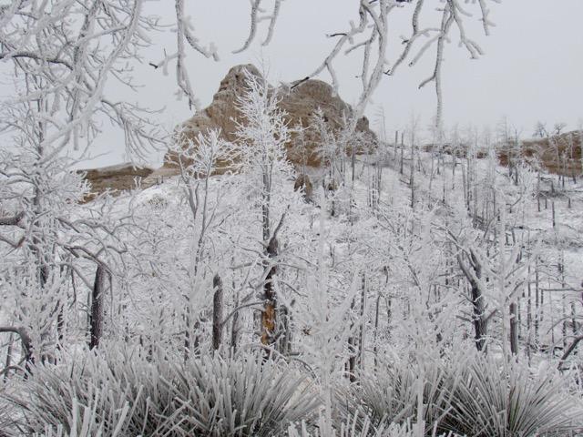 Little Wolf Ridge Butte framed by winter ice.