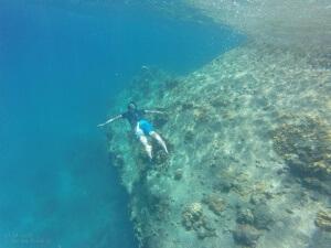 Koh Tao - Paradies unter Wasser