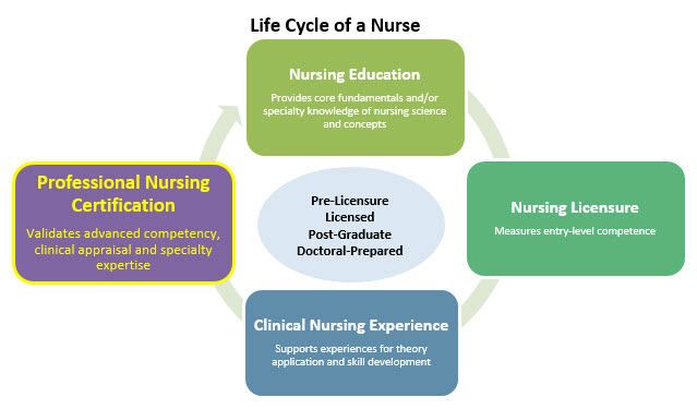 Life Cycle Of A Nurse Professional Nursing Certification
