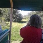 Nina Photographing Wild Spanish Horses