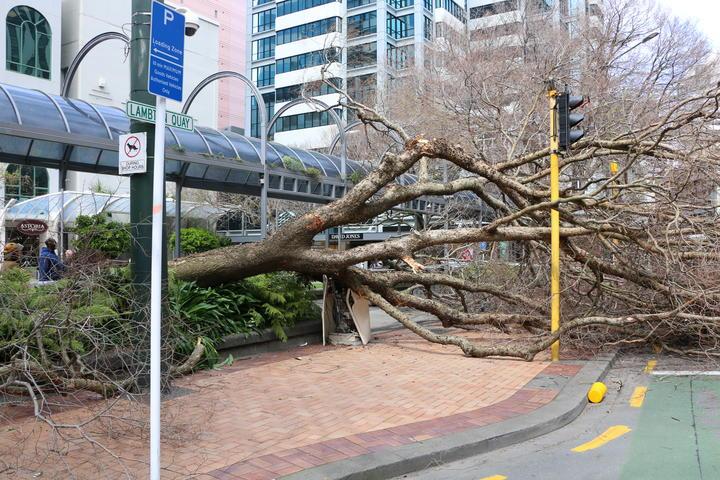 A large tree has fallen across Lambton Quay in Wellington.