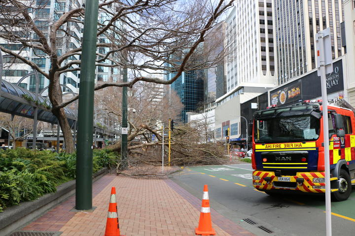 A large tree has fallen across the footpath and one lane of Lambton Quay in Wellington.