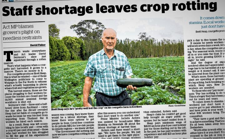 Kerikeri courgette grower Brett Heap in The Herald last Tuesday.