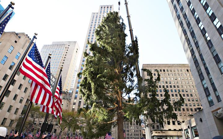 NEW YORK, NEW YORK - NOVEMBER 14: The Rockefeller Center Christmas Tree arrives at Rockefeller Plaza and is craned into place on November 14, 2020 in New York City.