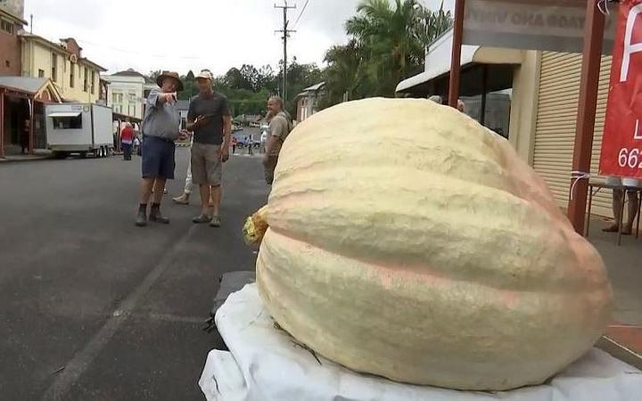 Giant pumpkin in Australia weighing 867kg