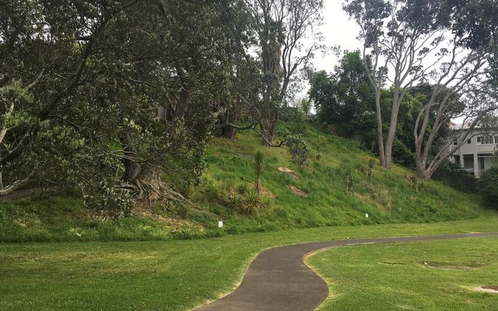 A section of the no-mow pilot on the slope that avoided being accidentally mown.