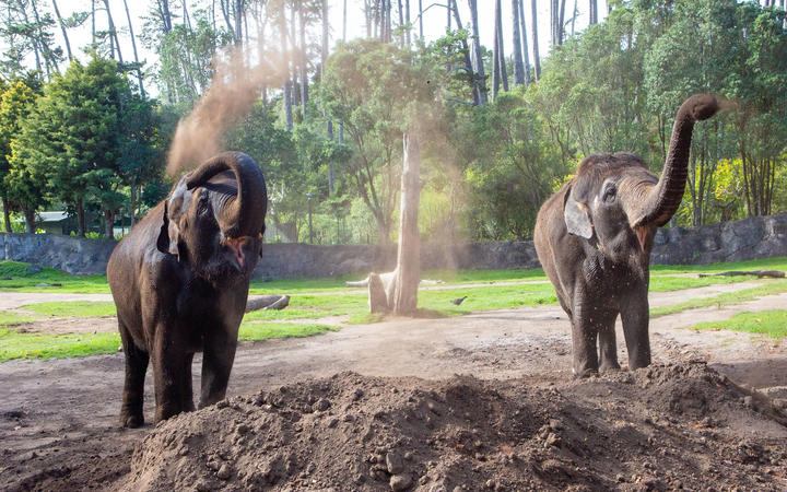 Asian elephants Burma and Anjalee will be moved from Auckland Zoo.