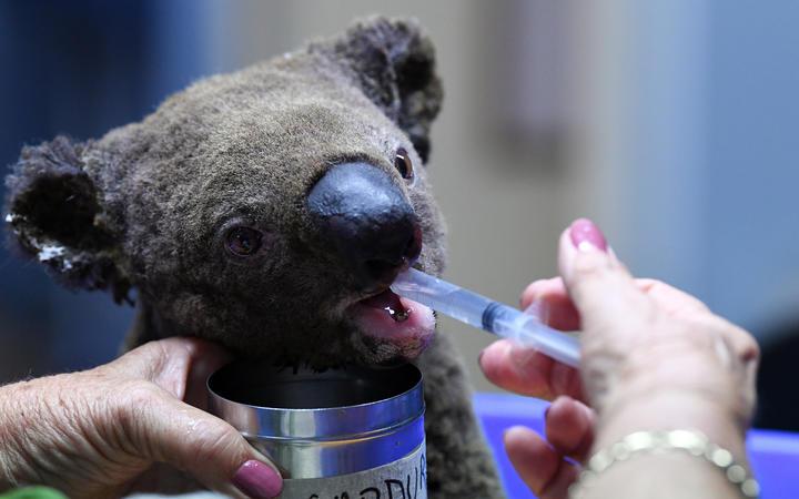 Australia's wildlife carers set to work around the clock over Christmas
