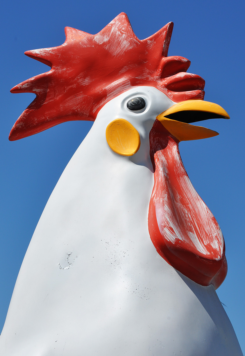 Chickens And Rooster Statues