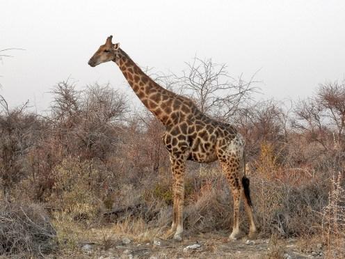 Sudafrica e Namibia in moto, il parco nazionale d'Etosha