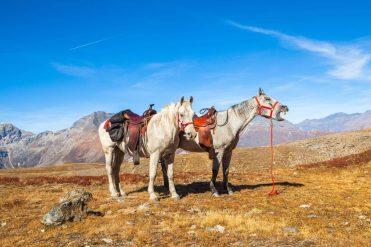 cavalli sul colle dell'assietta