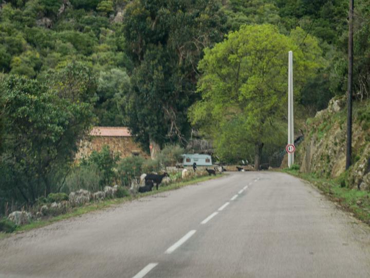 Corsica - road Calvi to Porto-arriving at check point