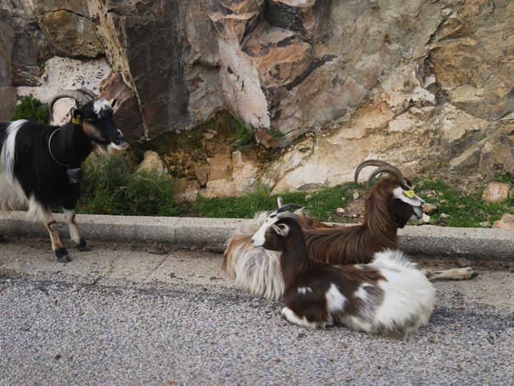 Corsica - road Calvi to Porto-check point team 1