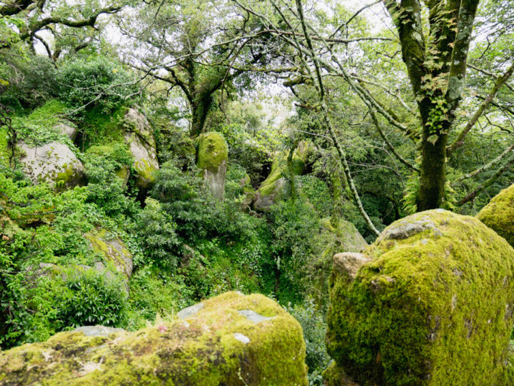 The surrounding nature of the Moors Castle, Sintra - Portugal - Learn more on roadtripsaroundtheworld.com