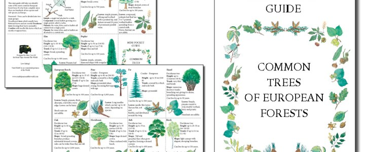 A Mini Guide to help you identify Trees of European Forests