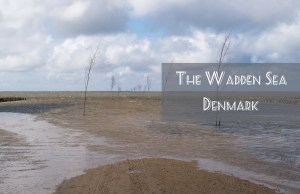 The Wadden Sea in Denmark, between expectations and reality - www.RoadTripsaroundtheWorld.com