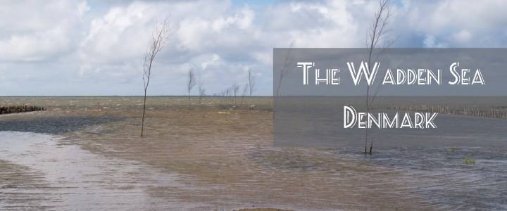 The Wadden Sea – Between expectations and reality