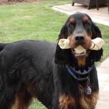Gathering all the dog bones