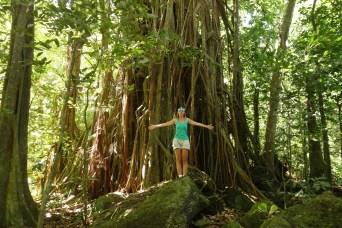 Hiking among massive trees
