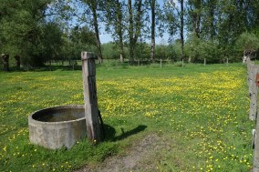 One of the paddocks in the countryside