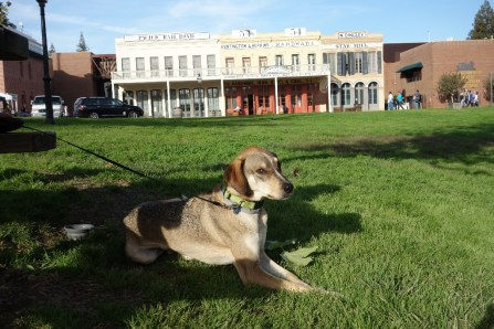 Herk relaxes in Old Town - he was not a fan of the busy, touristy sidewalks