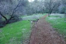 Walking back to the car before sunset in Hidden Falls Regional Park