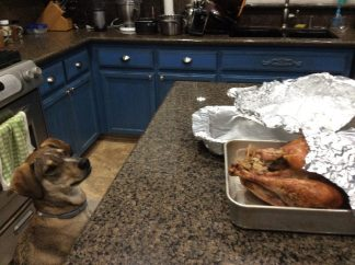 Herk would like some more turkey