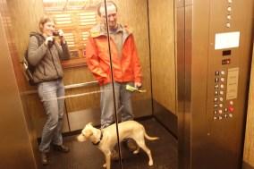 What we think is Jaxx' first elevator ride