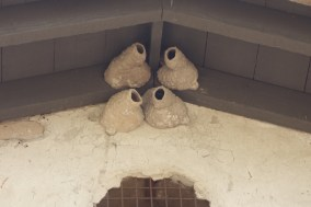 Swallow nests. This mission is famous for its revisiting swallow colonies each March.