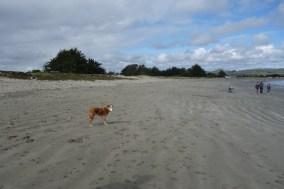 Lola on Doran Beach