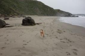 I love to run on the beach