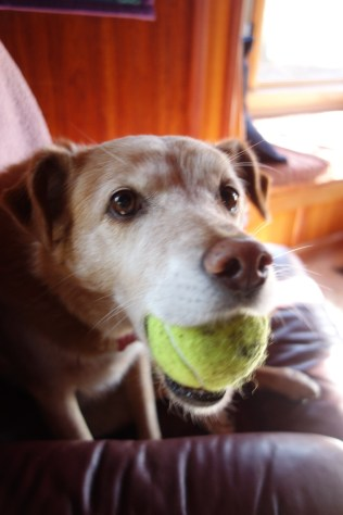 Lola and her tennis ball