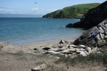 Baby elephant seals on the beach