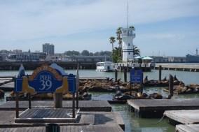 The famous sea lions of Pier 39