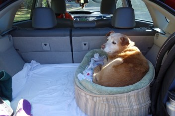 Driving to and in the park, Lola can get comfortable in her bed in the trunk