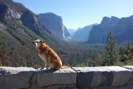 Tunnel View is the most spectacular viewpoint in the park - morning view
