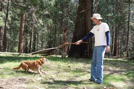 Playtime - Lola loves sticks!
