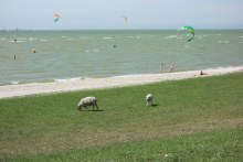 Do you think the sheep go to the beach as well?